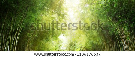 Bamboo forest and green meadow grass with natural light in blur style. Bamboos green leaves and bamboo tree with bokeh in nature forest. Nature pattern view of leaf on blurred greenery background. #1186176637