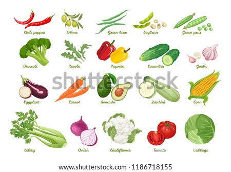 Set of vector icons vegetables. Chili, olive, bean, soybean, peas, broccoli, arugula, paprika, cucumber, garlic, eggplant, carrot, avocado, zucchini, corn, celery, onion, cauliflower, tomato, cabbage. #1186718155
