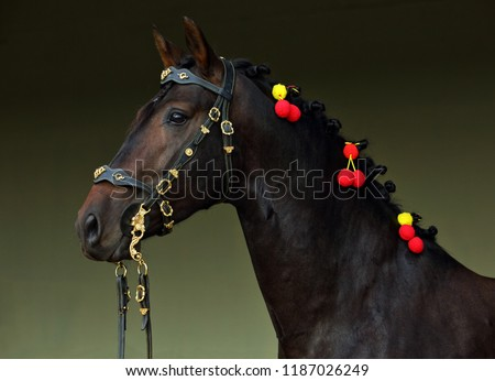 Andalusian horse in dark stable Royalty-Free Stock Photo #1187026249