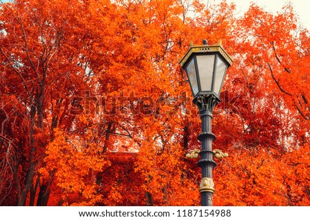 Fall trees background. Metal lantern on the background of the fall trees. Fall park scene in vintage tones #1187154988