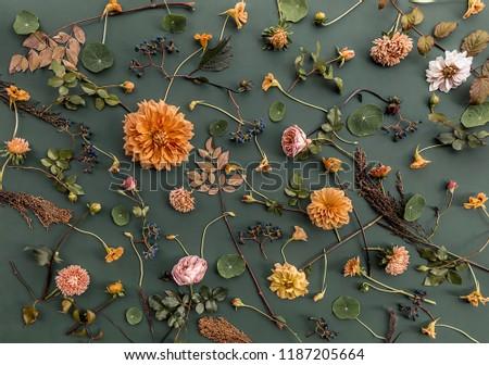 Orange flower background. #1187205664