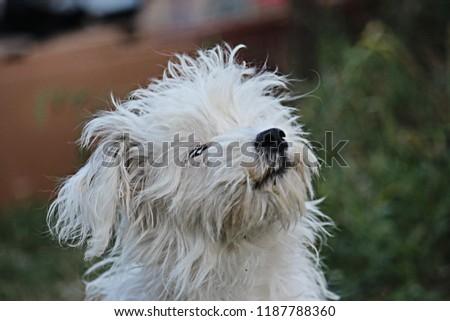 A dog in the garden #1187788360