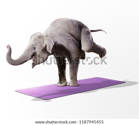 Creative elephant balancing on the yoga mat in white background