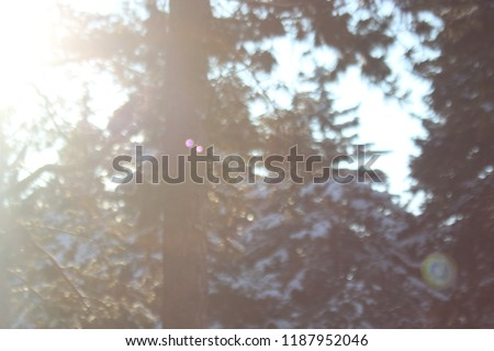 Winter  christmas tree background with a sunray and natural light violet white bokeh on dark forest,beautiful blur landscape for text input, slogan, postcard invitation design.  #1187952046