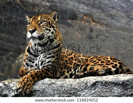 leopard lying on the rocks, Thailand