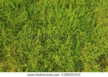 green grass, green nature background. #1188501415
