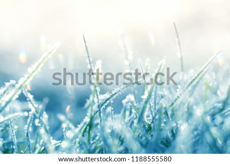 Grass in the frost. Frost on the grass in the morning sun.Winter natural plant background in cold blue tones.  Grass background in gentle pastel colors.November and December. Late Autumn. Winter time Royalty-Free Stock Photo #1188555580