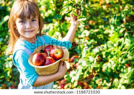 Child with Child with an apple. Selective focus. Garden Food #1188721030
