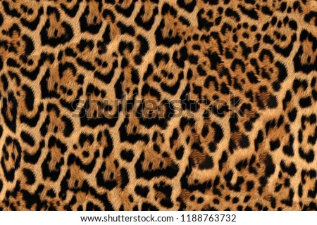 Jaguar Fur Pattern Seamless Real Hairy Texture #1188763732