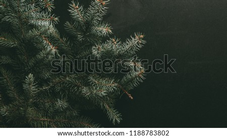 green fir branches on dark background #1188783802