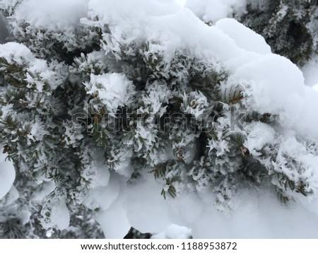 cold Manitoba Canada winter #1188953872