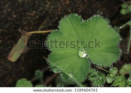 Raindrops on leaves.artvin /savsat #1189604761