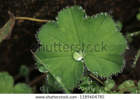 Raindrops on leaves.artvin /savsat #1189604785