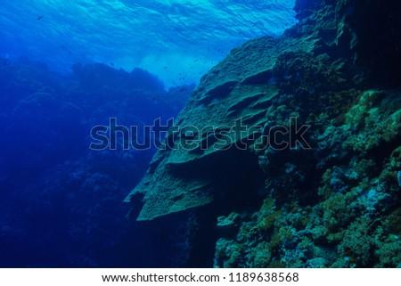 massive corals at the Red sea Egypt #1189638568