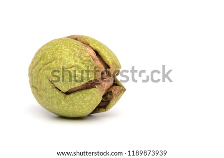 One Walnut in Green Skin Isolited On White Background for Organic Nutrition #1189873939