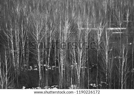 forest black and white photography. #1190226172