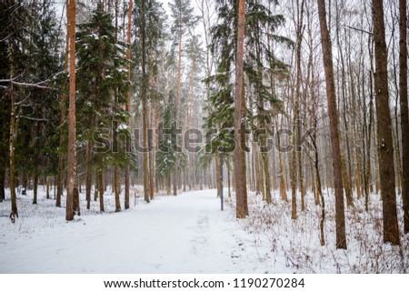 Image of snow trail and trees in forest #1190270284
