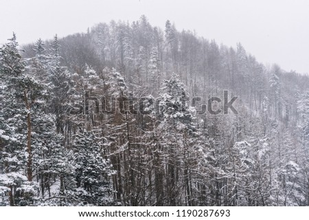 Snowy pine trees snow landscape. #1190287693