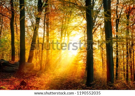 Enchanting autumn light in a forest, with vivid rays of gold light falling through the trees unto the ground #1190552035