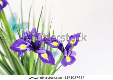 Purple irises on a white background with butterflies #1191027439