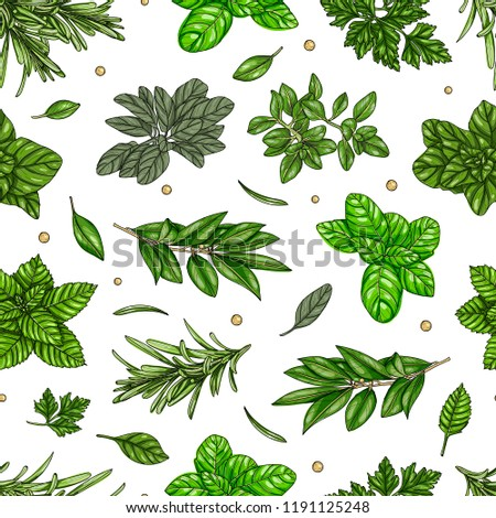 Seamless pattern, culinary herb, spices isolated on white background, card template, for book, cover, package, label, banner. Hand drawn illustration. Vector, eps 10 #1191125248