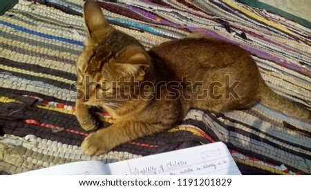 Kitty cute kitty #1191201829
