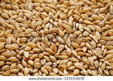 heap of pearl barley grains, vegetarian food #1191556078