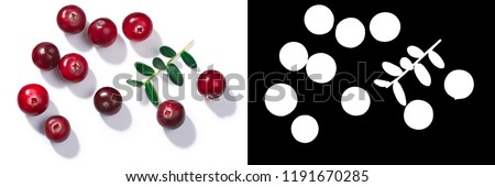 Cranberries (Vaccinium oxycoccus), top view. Direct hard light #1191670285