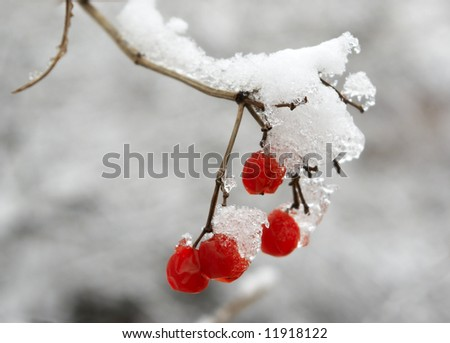 Red berries Royalty-Free Stock Photo #11918122