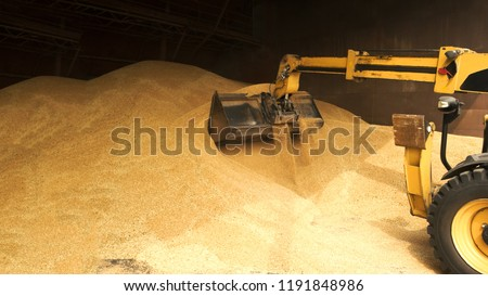 Tracktor loading graing from warehouse. Close up big pile of wheat grain. #1191848986