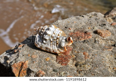 Beautiful seashell on the seashore #1191898612