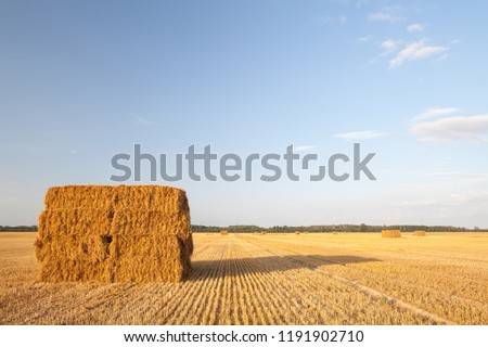 Yellow golden bales of wheat hay straw stacked in a heap in stubble field on a summer evening in Bauska area, Latvia #1191902710