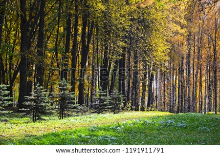 Beautiful autumn landscape, birches with yellow  leaves in the wind, autumn forest, falling leaves #1191911791