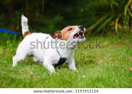 Angry dog aggressively barking and defending his territory Royalty-Free Stock Photo #1191951124
