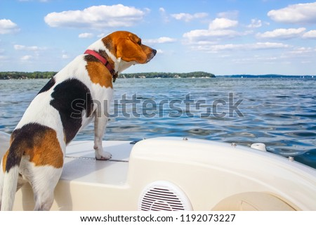 Beagle standing on the back of a boat looking out over the water