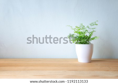 Indoor plant on wooden table and white wall #1192113133