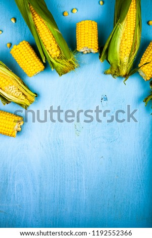 Ripe corn on a blue table close-up. Place for your text. #1192552366
