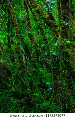 Detail of the enchanted forest in carretera austral, Bosque encantado Chile patagonia #1192593097