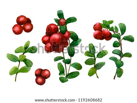 Picture-set of cowberry sprigs and berries hand painted in watercolor isolated on a white background #1192608682