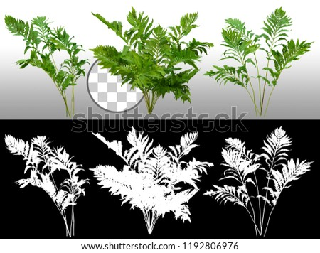 Leafs of braken fern plant isolated on a transparent background via an alpha channel of great precision. High quality mask without unwanted edge. Very high resolution for professional composition. #1192806976
