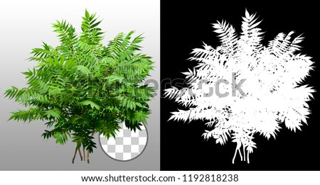 Green shrub. Bush of leafy branches. Foliage of plant isolated on transparent background via an alpha channel of great precision. High quality mask without unwanted edge. For professional composition. #1192818238