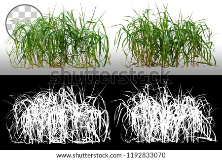 Bunch of wild green grass. Blades of grass. Green tufts isolated on transparent background via an alpha channel. High quality mask without unwanted edge. For professional composition. Tuft of grass.  #1192833070