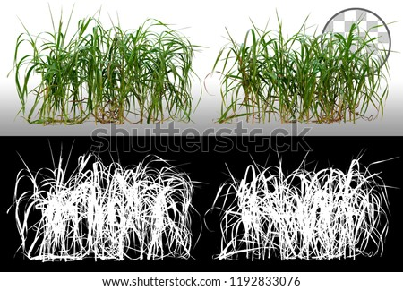 Bunch of wild green grass. Blades of grass. Green tufts isolated on transparent background via an alpha channel. High quality mask without unwanted edge. For professional composition. Tuft of grass.  #1192833076