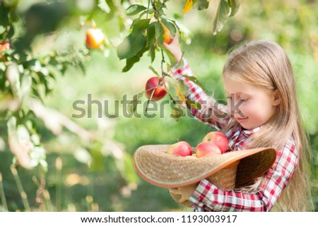 Girl with Apple in the Apple Orchard. Beautiful Girl Eating Organic Apple in the Orchard. Harvest Concept. Garden, Toddler eating fruits at fall harvest. Apple picking. #1193003917