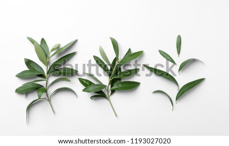 Twigs with fresh green olive leaves on white background, top view #1193027020