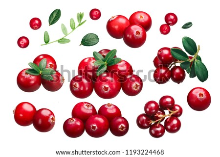 Cranberries and Lingonberries: singles, clusters, leaves (Vaccinium spp.) isolated on white #1193224468