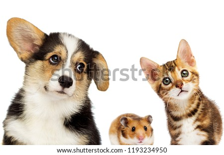 kitten and puppy and hamster #1193234950