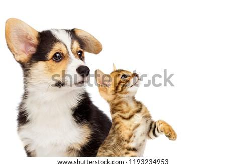 kitten and puppy #1193234953