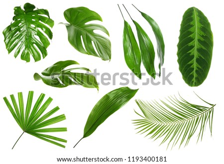 Different green tropical leaves on white background #1193400181