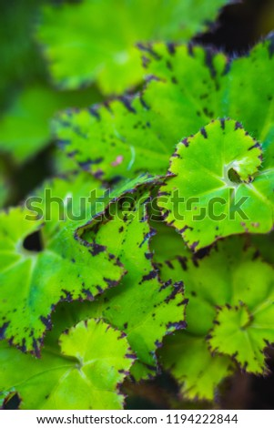 Beauty Natural Green leaves for background and wallpaper which it can use for online advertisement #1194222844